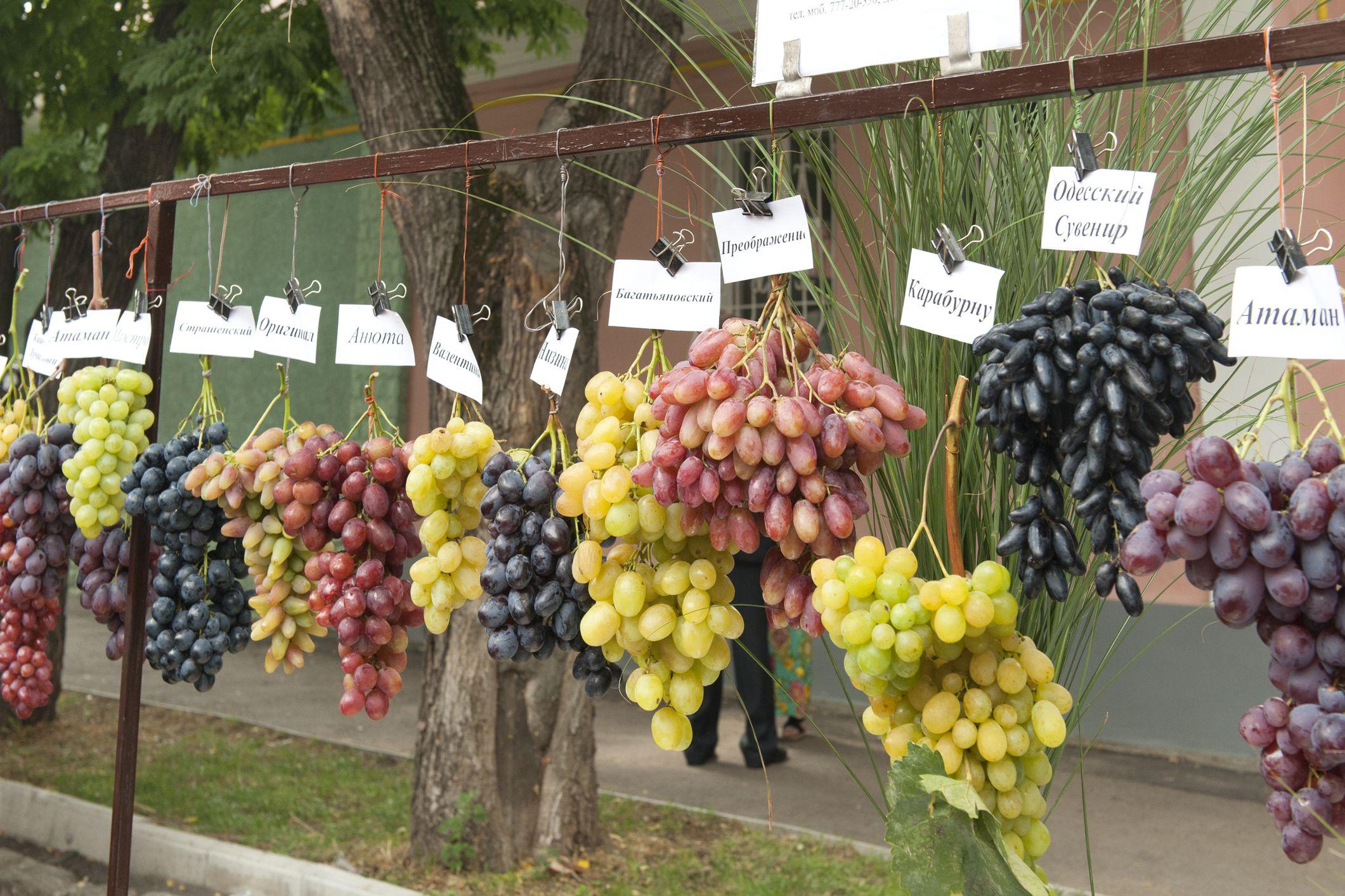 how to become a successful grape farmer in kenya oxfarm organic ltd