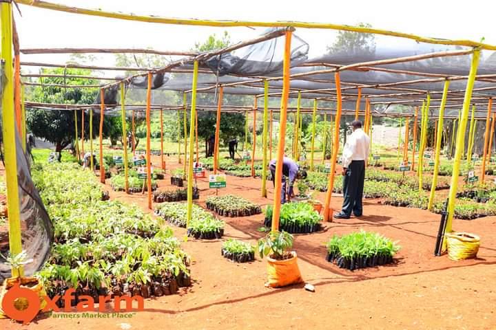 certified seedlings